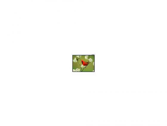 Экран настенный Lumien Master Picture 173x200см Matte White LMP-100121 цена