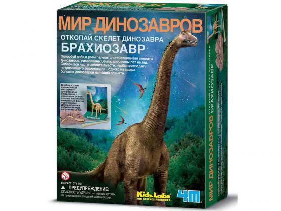 Игровой набор 4M Скелет Брахиозавра 00-03237 4m юный врач скелет человека 00 03375