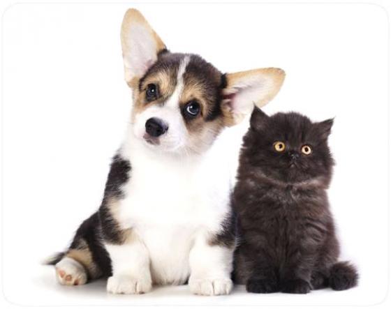 Коврик для мыши Buro BU-M40095 с рисунком котенок и щенок набор для купания жирафики котенок и щенок 68865