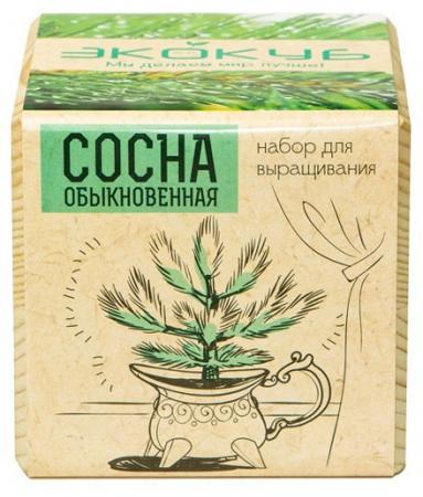 Набор для выращивания ЭКОКУБ Сосна ECB-01-09