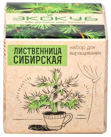 Набор для выращивания ЭКОКУБ Лиственница ECB-01-07