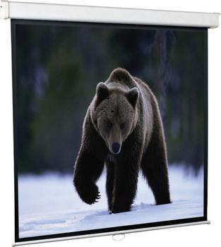 купить Экран настенный ScreenMedia Economy 203х203см SEM-16903 онлайн