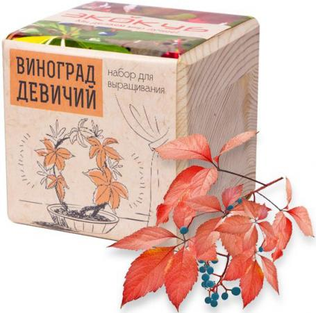 Набор для выращивания ЭКОКУБ Виноград Девичий ECB-01-16 виноград девичий в ярославле