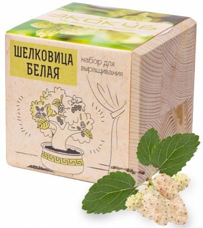 Набор для выращивания ЭКОКУБ Шелковица белая ECB-01-17