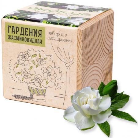 Набор для выращивания ЭКОКУБ Гардения жасминовидная ECB-01-18 наборы для выращивания растений вырасти дерево набор для выращивания ель канадская голубая