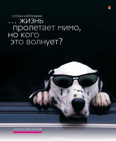 Тетрадь общая Альт Приколы. Собаки 48 листов клетка скрепка 7-48-696 в ассортименте