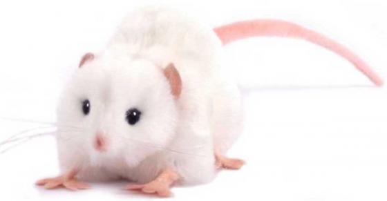 Мягкая игрушка крыса Hansa Крыса белая 12 см белый искусственный мех 5576 hansa fk 261 4 x