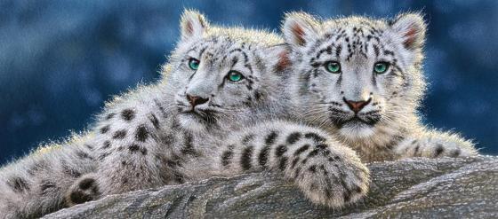 Пазл 600 элементов Кастор Снежные леопарды