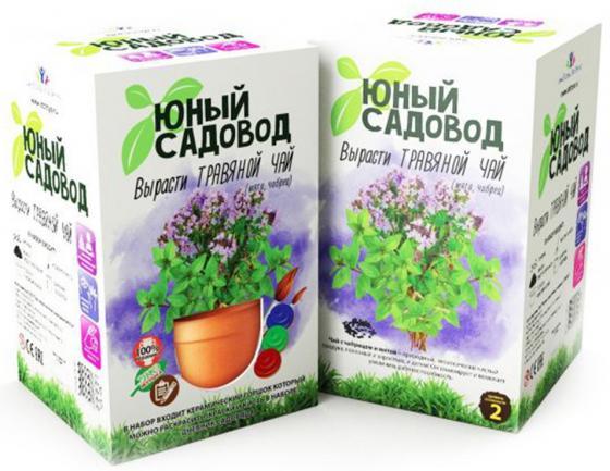 НАБОР ДЛЯ ЭКСПЕРИМЕНТОВ ЮНЫЙ САДОВОД ВЫРАСТИ ТРАВЯНОЙ ЧАЙ в кор.6шт черный гречневый чай органический горький гречишный чай здравоохранение травяной чай высшего качества чай травяной чай