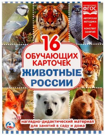 Карточки в папке Умка Животные России животные россии