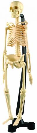 Набор EDU-TOYS SK 046 Мини скелет стоимость