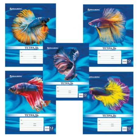 цены на Тетрадь школьная BRAUBERG MAGIC FISH 12 листов клетка скрепка  в интернет-магазинах